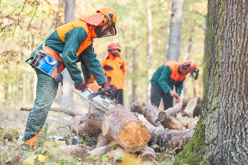 Waldarbeiter, die einen Baumstamm zersägen