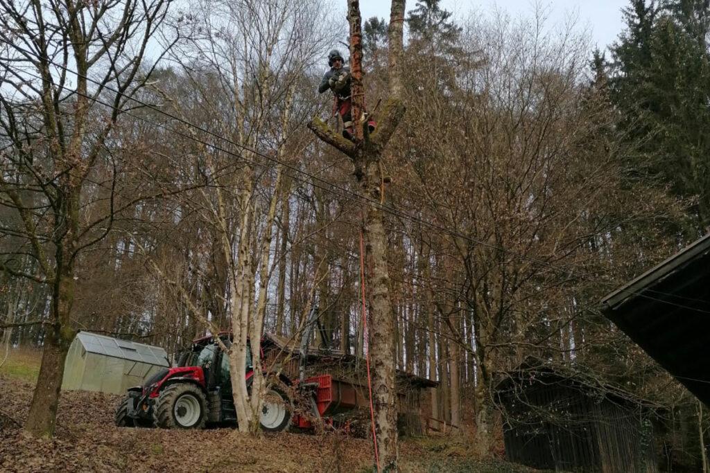 Waldarbeiter, der auf einem hohen Baum arbeitet