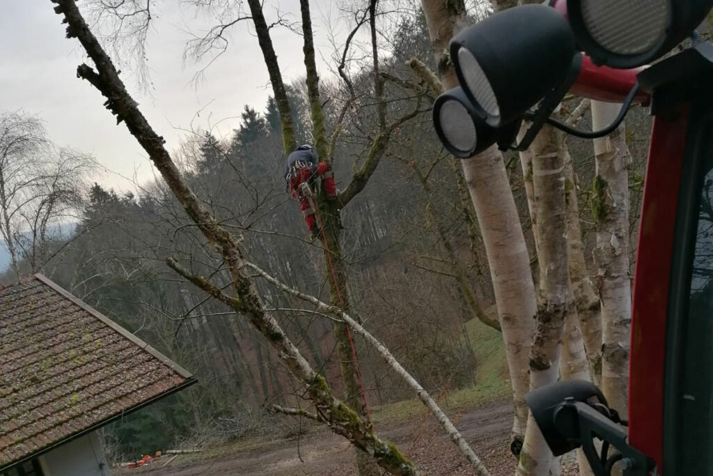 Arbeiter, der auf einen Baum klettert
